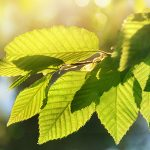 Foliar Fertilizers from Taino