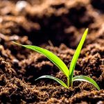 Soil and Seed Inoculants