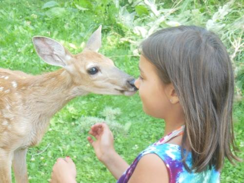 anna-deer