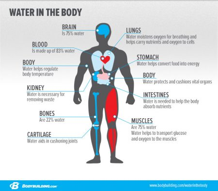 body-water
